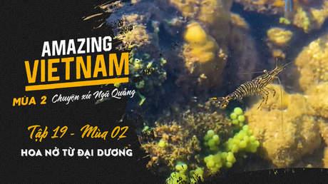 Amazing Vietnam Mùa 2 - Tập 19: Hoa nở từ đại dương