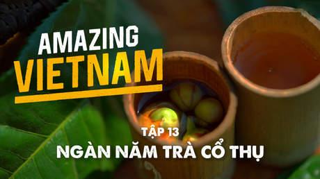 Amazing Vietnam - Tập 13: Ngàn năm trà cổ thụ