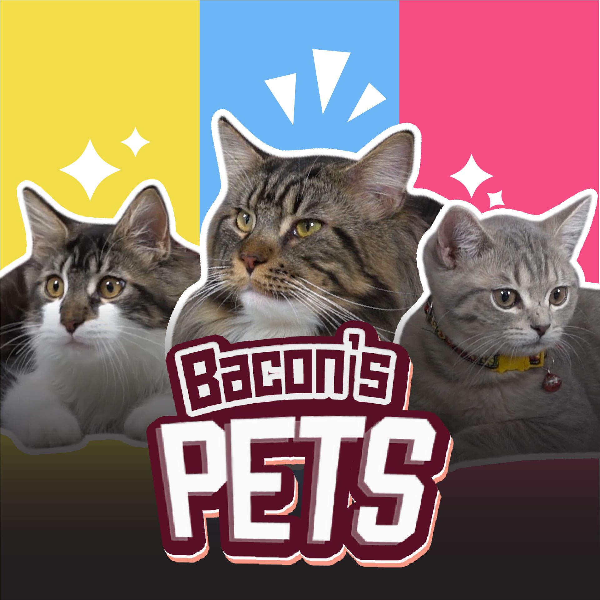 Bacon's Pet